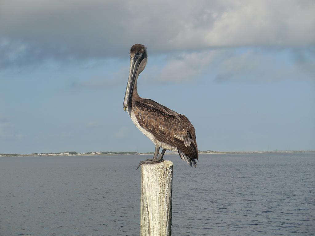 bird near our charter boat