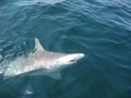 shark fishing navarre