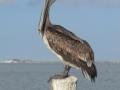 bird in navarre